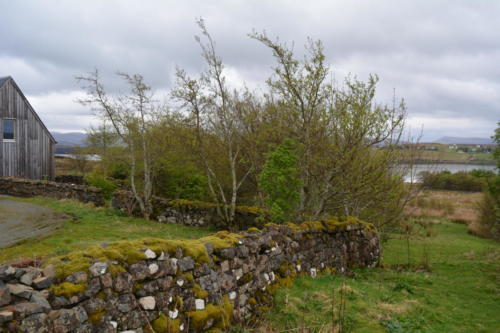 Traditional dry stone walls separate us from the neighbouring grazing sheep